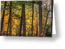 Autumn Pines Square Greeting Card