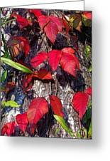 Autumn Poison Ivy Greeting Card