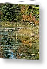 Autumn Pond Scene Greeting Card