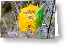 Autumn Poplar Leaves Greeting Card