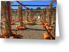 Autumn Pumpkin Patch Greeting Card by Joann Vitali