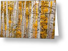 Autumn Quaking Aspen Greeting Card