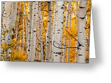 Autumn Quaking Aspen Panoramic Greeting Card