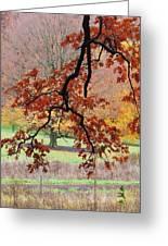 Autumn Rainbow Greeting Card by Todd Sherlock