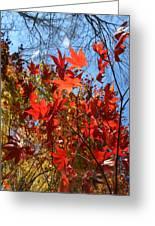 Autumn Reach  Greeting Card