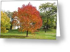 Autumn Red Tree Greeting Card