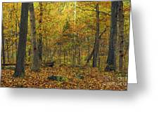 Autumn Red Was Blood Red Greeting Card