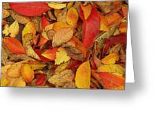 Autumn Remains Greeting Card
