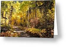 Autumn Road - Tipton Canyon - Casper Mountain - Casper Wyoming Greeting Card