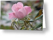 Autumn Rose Greeting Card