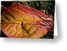 Autumn Saga Greeting Card