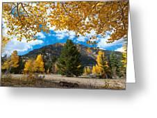 Autumn Scene Framed By Aspen Greeting Card
