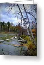 Autumn Scene Of Along The Shore Of The Platte River In Michigan Greeting Card
