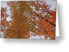 Autumn Sky Through Trees Greeting Card