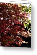 Autumn Snowball Bush Greeting Card