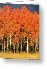 Autumn Splender  Greeting Card