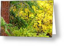 Autumn Splendor 14  Greeting Card