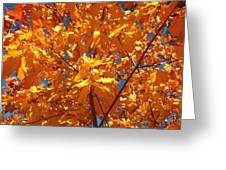 Autumn Splendor 15 Greeting Card