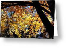 Autumn Splendor 3 Greeting Card