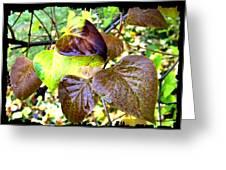 Autumn Splendor 4 Greeting Card