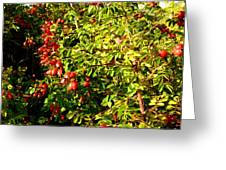 Autumn Splendor 5 Greeting Card