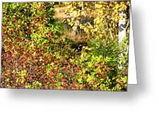 Autumn Splendor 7 Greeting Card