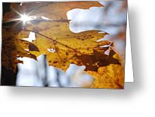 Autumn Star Greeting Card