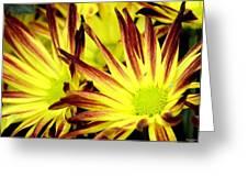 Autumn Starburst Greeting Card