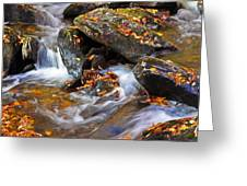 Autumn Stream North Georgia Greeting Card