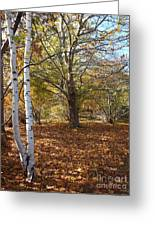 Autumn Stroll  Greeting Card by Kimberly Maiden