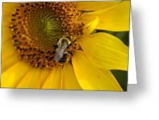 Autumn Sunflower Greeting Card