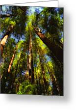 Autumn Sunlight Cast On Majestic Green Oregon Old Growth Forest  Greeting Card