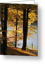 Autumn Sunlight Greeting Card