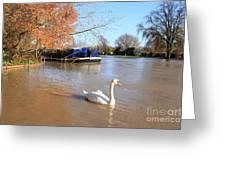 Autumn Swan Greeting Card