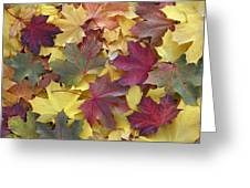 Autumn Sycamore Leaves Germany Greeting Card