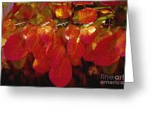 Autumn Greeting Card by Sylvia  Niklasson