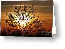 Autumn Tree In The Sunset Greeting Card