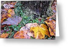 Autumn Tree Trunk  Greeting Card