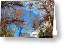 Autumn Trees And Heaven Greeting Card