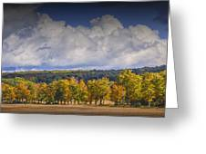 Autumn Trees In A Row Greeting Card
