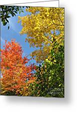 Autumn Treetops Greeting Card