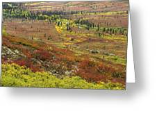 Autumn Tundra With Boreal Forest Greeting Card