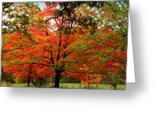 Autumn Umbrella Of Color Greeting Card