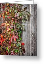 Autumn Vine Greeting Card