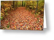 Autumn Walk In Ohio Greeting Card