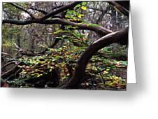Autumn Wild Nature Denmark Greeting Card