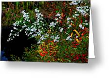 Autumn Wildflowers Greeting Card