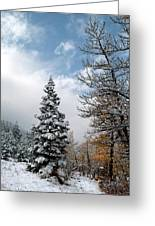 Autumn Winter Colors 2 Greeting Card by Roger Snyder
