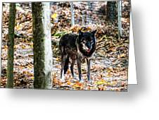 Autumn Wolf Greeting Card