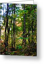 Autumn Wood Greeting Card